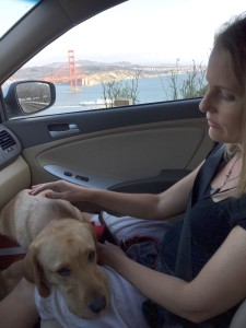 Roja relaxing on my lap while driving through Golden Gate Park